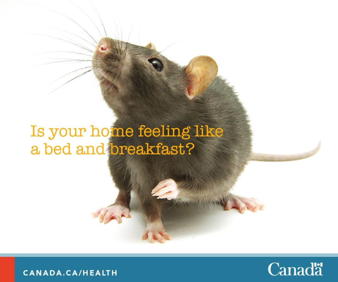 Health Canada Are You Struggling With A Problem Of Rats Or Mice